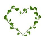 Evergreen Leaves in A Heart Shape Wreath