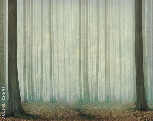 Misty evening in the forest - 102426985