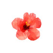 Polygon red hibiscus bud on a white background. Vector art.