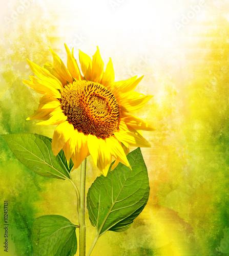 Papiers peints Jaune Beautiful sunflower field in summer