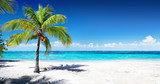 Scenic Coral Beach With Palm Tree  - 102463727