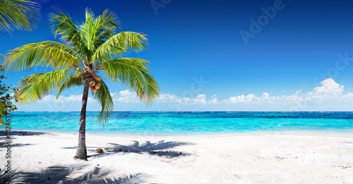 Foto op Plexiglas Tropical strand Scenic Coral Beach With Palm Tree