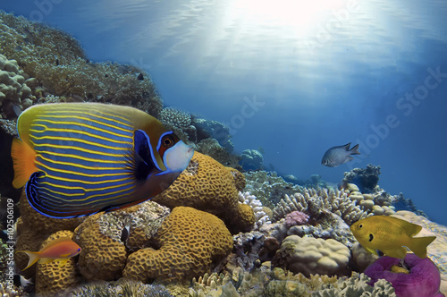 Poszter Tropical Fish on Coral Reef