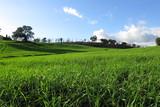 paesaggio agricolo, campagna