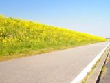 菜の花咲くサイクリングロード
