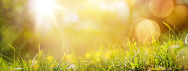 tło streszczenie wiosna lub lato tło z g świeżych