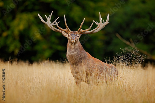 Babes Red Deer