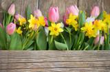Fototapety Frühlingsmotiv Tulpen u. Narzissen