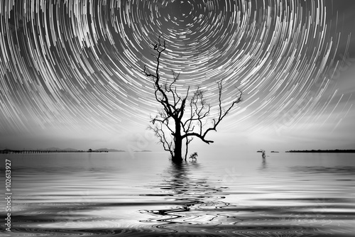 Alone tree and star trail Photography for your interior. - 102613927