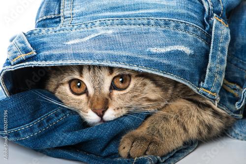 obraz lub plakat Kätzchen in Jeans