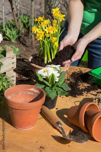 Gartenarbeit im Frühjahr - Einpflanzen von Narzissen zum Osterfest als Dekoration Canvas Print