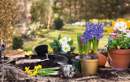 Zdjęcia na płótnie, fototapety, obrazy : Gartenarbeit im Frühling. Farbenfrohe einjährige Blumen im Garten.