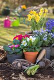 Gartenarbeit im Frühling. Farbenfrohe einjährige Blumen im Garten.