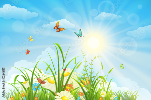 Summer and spring landscape, meadow with flowers, blue sky and butterflies - 102646117