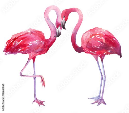 ap english pink flamingo essay