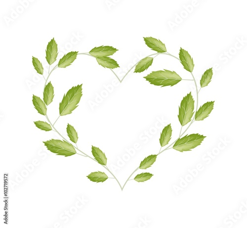 Naklejka Green Vine Leaves in A Beautiful Heart Shape