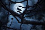 Black Raven on Branch at Night - 102756902
