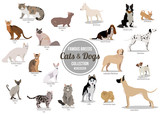 Set of flat sitting or walking cute cartoon dogs and dogs. Popular breeds. Flat style design isolated icons.