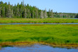Bright green and blues in a Maine Marsh