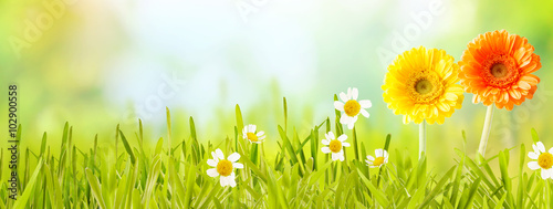 Colorful fresh panoramic spring banner - 102900558