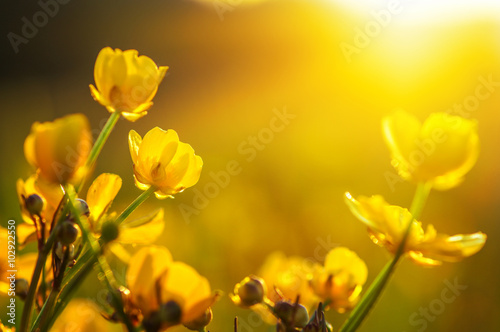 Plakat field of spring flowers
