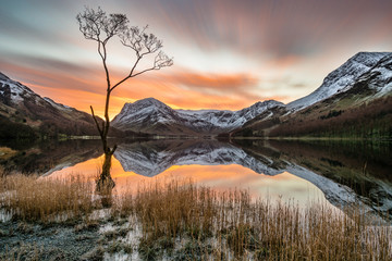 Vibrant orange sunrise with moving clouds and snowcapped mountains reflecting in calm still water with lonely tree in foreground at Buttermere, Lake District, UK. © danielkay