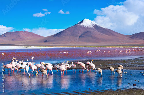 Flamingoes in Laguna Colorada ,  Bolivia