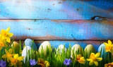 Fototapety art Easter Background with easter eggs and spring flowers on gre