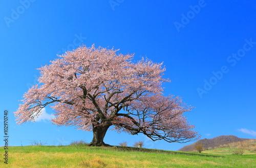 Poster 亀ケ森の一本桜