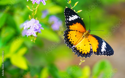 Deurstickers Vlinder Butterfly in park.