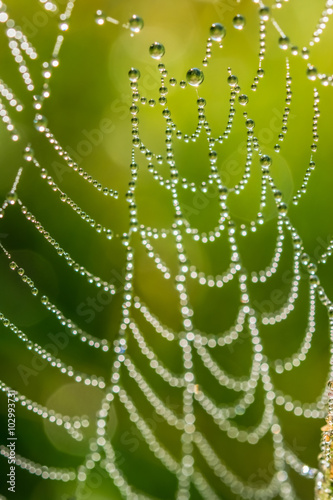 Fototapeta Drops of dew on a spider web
