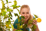 Blonde woman harvesting big, yellow lemons from organically grow