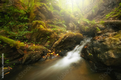 forest river with stones and moss
