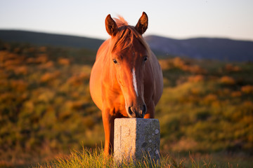 Early morning mountains, horse in rays of rising sun.