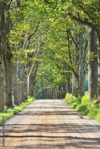 stara-droga-przez-pieknej-alei-w-wsi-ligatne-lotwa