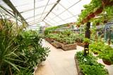 Fototapety Gewächshaus im Gartencenter mit Pflanzen