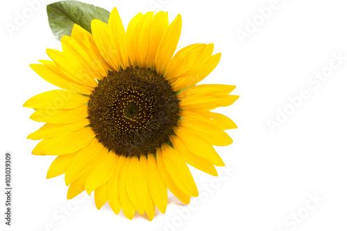 one big sunflower round