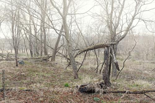 折れた樹木の林