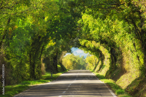 fototapeta na ścianę Tunnel from the oak trees over a road in the Italy, natural seasonal european spring background