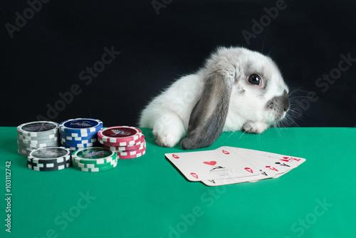 Poster poker d'assi coniglio