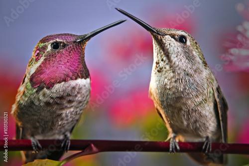 Dwa hummingbirds stoją obok siebie na gałązkę z kwiatami w tle.