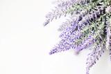 Lavender - 103137716