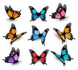 Fototapety Big collection of colorful butterflies. Vector