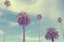 Palmiers sur la plage de Santa Monica.