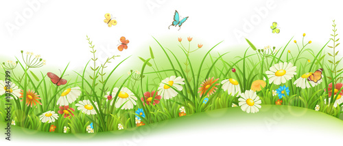 Spring or summer floral banner with green grass, flowers and butterflies - 103184799