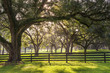 Large oak tree branch with farm fence in the rural countryside looking serene peaceful calm relaxing beautiful southern tranquil magical