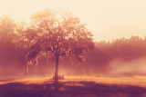Silhouette of a lone tree in a field early at sunrise or sunset with sun beams mist and fog with a retro vintage filter to feel inspirational rural peaceful meditative - 103206701