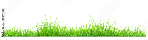 Fototapeta Green grass