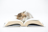 Little Persian kitten sleeping on a book