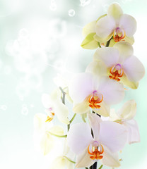 Orchid flowers on abstract background © red150770